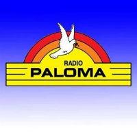 Paloma de Talca